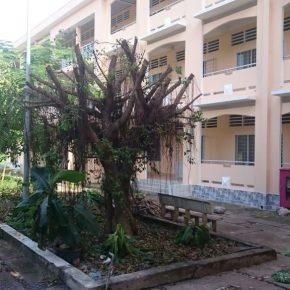 Văn tế Bóng cây xanh